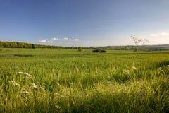 Ładny angielszczyzny pole w wiośnie Zdjęcia Royalty Free