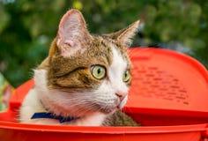 Ładny domowy zielonooki kot zdjęcie stock