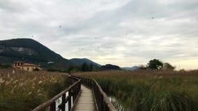 Ładny drewniany przejście po środku jeziora z mnóstwo wysokim trawy chodzeniem przez silnego wiatru zdjęcie wideo
