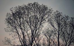 ładny drzewo i czerwieni niebo przy półmrokiem obrazy stock
