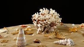 Ładny duży denny koral i różni seashells na piasku, czerń, obracanie zdjęcie wideo