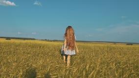Ładny dziewczyna bieg przez żółtego pszenicznego pola Szczęśliwa piękna młoda kobieta outdoors cieszy się naturę Uwalnia, wolność zdjęcie wideo
