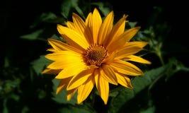 ładny i piękno kwiat zdjęcia stock