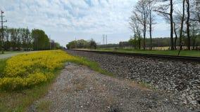 Ładny kolor żółty kwitnie obok torów szynowych Fotografia Royalty Free