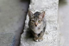 Ładny kot, przyroda, piękna, kiciunia, zwierzę, zwierzę domowe, śliczny, kot, uroczy kot obrazy royalty free