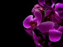 Ładny kwiat odizolowywający na czarnym tle zdjęcia stock
