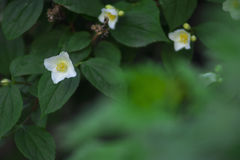 Ładny kwitnący białych kwiatów zamknięty up Obrazy Royalty Free