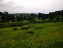 Ładny lasu krajobraz i wzgórza greenery zdjęcie stock