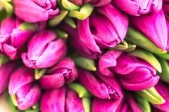 Ładny naturalny bukiet od purpurowych tulipanów jako romantyczny tło Selekcyjna ostrość różowe tulipany się blisko Purpurowy tuli Obrazy Stock