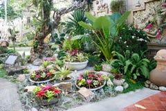 Ładny ogród, zielone dekoracj rośliny przy kurortem w Phuket, Tajlandia Obrazy Royalty Free