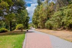 Ładny park wśrodku miasta, duzi drzewa i trawa, zakrywamy miejsce z drogą robić sporta ina niebieskiego nieba dniu Zdjęcie Stock