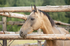 Ładny portret koń w ziemi uprawnej lub łące Fotografia Royalty Free