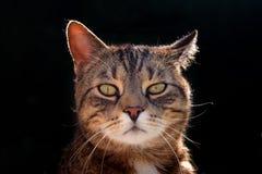 Ładny portreta kot, zamyka up Zdjęcia Royalty Free