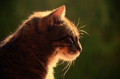 Ładny portreta kot, zamyka up Obraz Stock