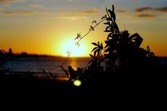 Ładny słońce Zdjęcie Royalty Free