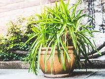 Ładny terakotowy patio garnek z zielonymi roślinami, zbiornika flancowaniem i ogrodnictwem, Obraz Stock