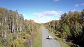 Ładny widoku z lotu ptaka samochód jedzie wzdłuż drogi wśród brzoza lasu zbiory wideo