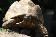 Ładować Tortoise Zdjęcie Royalty Free