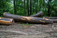 Ładowniczy drewniany notuje dalej halną drogę 06 Fotografia Royalty Free