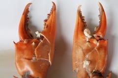Łamający Gotowany kraba ciała budowniczy Cheliped krab, przygotowany surowy skorupy zwierzę przy domowej roboty wyśmienitą restau fotografia stock