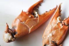 Łamający Gotowany kraba ciała budowniczy Cheliped krab, przygotowany surowy skorupy zwierzę przy domowej roboty wyśmienitą restau zdjęcie royalty free