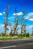 Łamający spadać drzewa Łamani drzewa w następstwie huraganu Ukraina, Cherkassy region, lato 2017 Zdjęcia Royalty Free