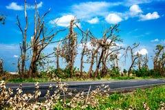 Łamający spadać drzewa Łamani drzewa w następstwie huraganu Ukraina, Cherkassy region, lato 2017 Zdjęcie Stock