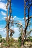 Łamający spadać drzewa Łamani drzewa w następstwie huraganu Ukraina, Cherkassy region, lato 2017 Fotografia Stock