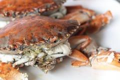 Łamana część gotowany kamiennego kraba ciała budowniczy Cheliped krab, przygotowany surowy skorupy zwierzę przy domowej roboty wy obraz stock