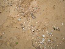 Łamana skorupa na piasku obrazy royalty free