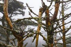 Łamani drzewa Na Mgłowym dniu Obraz Stock
