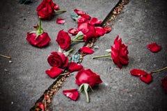 Łamani różani płatki fotografia stock