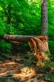 Łamany drzewny lying on the beach na śladzie Zdjęcie Royalty Free