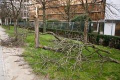 Łamany drzewo Obrazy Royalty Free