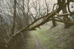 Łamany drzewo blisko ścieżki w lesie Zdjęcia Stock