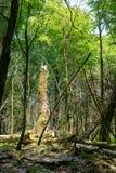 Łamany drzewo przerastający z mech w zielonym lesie zdjęcia stock
