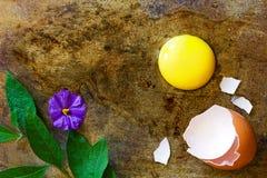 Łamany jajko z kwiatem i jajeczną skorupą Zdjęcia Stock