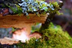 Łamany mechaty drzewny bagażnik Zdjęcie Royalty Free