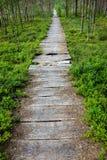 Łamany natura ślad z czarnych jagod roślinami Fotografia Royalty Free