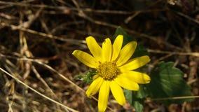 Łamany płatek kwiat Obraz Stock
