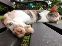 Łapa kota zakończenie Fotografia Stock