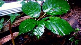 Łapiący w liściach Zdjęcia Royalty Free