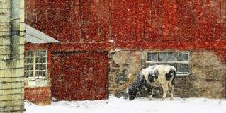 Łapiący Za zimnie W obrazy stock