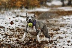 Łapie piłkę Zdjęcie Stock