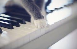 Łapy kot na syntetyków kluczach fotografia stock