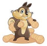 łasowania dokrętek wiewiórka Zdjęcie Royalty Free