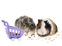 łasowania królik doświadczalny obrazy royalty free
