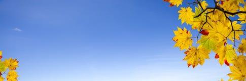 Łatwego obrazka jesieni krajobrazu piękny klonowy tło Fotografia Stock