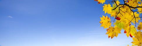 Łatwego obrazka jesieni krajobrazu piękny klonowy tło Zdjęcie Royalty Free