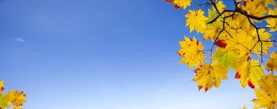 Łatwego obrazka jesieni krajobrazu piękny klonowy tło Fotografia Royalty Free